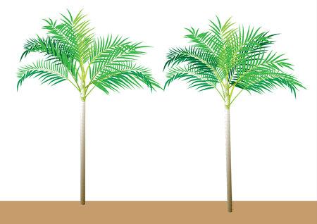 frond: Palm tree ,Dwarf Date, Pigmy Date vector illustration