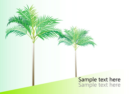 fronds: Palm tree ,Dwarf Date, Pigmy Date vector illustration