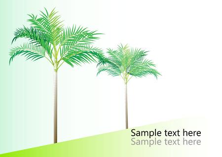 dwarf: Palm tree ,Dwarf Date, Pigmy Date vector illustration