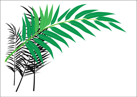 oil tree: Palm oil tree leaves for background