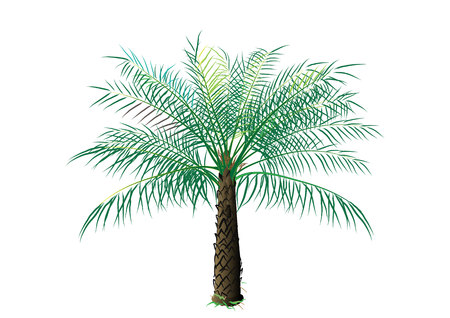 on the tree: Palm oil tree on white background,vector illustration