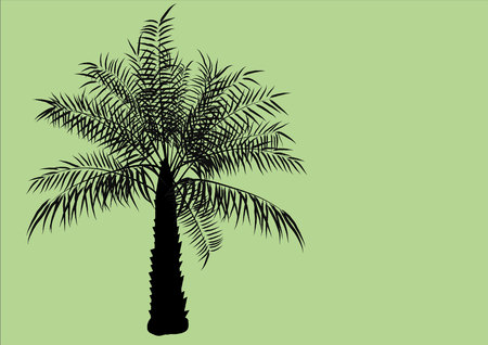 Palm oil tree  silhouette on green background Çizim