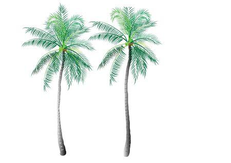 coconut trees: Coconut trees on white background,vector illustration Illustration