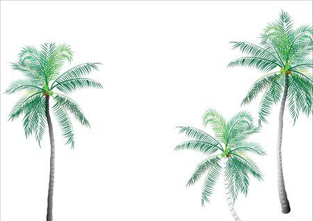 Coconut tree background object,vector illustration Illusztráció