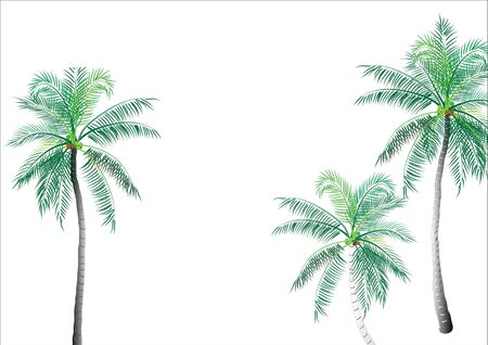 coconuts: Coconut tree background object,vector illustration Illustration