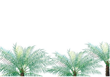 palm oil: Palm oil background vector illustration