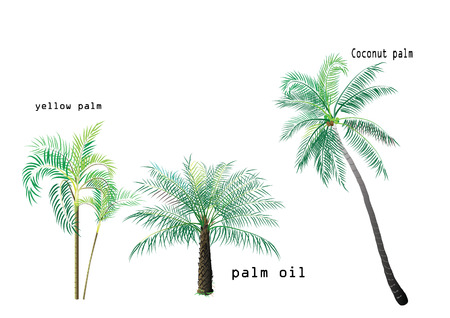 Palm set ,Coconut tree, palm oil, yellow palm come together with the wold telling the name on white background,vector illustration