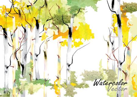 birch forest: Birch tree ,forest birch trees  vector watercolor brush hand drawn  Illustration