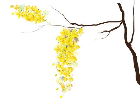 Golden shower bloemen of Ratchaphruek, gele bloemen aquarel blik op witte achtergrond, set van de ASEAN nationale bloem voor Thailand