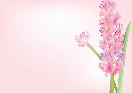 흰색 배경, 벡터 일러스트 레이 션에 히아신스 핑크 꽃