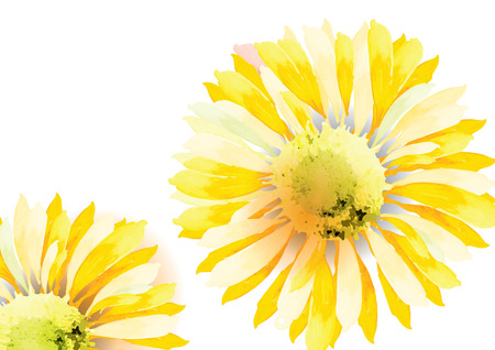 sun flowers: Sunflower abstract sunflower for background vector illustration