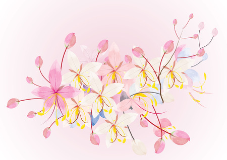 invitation background: Pink cassia or wishing tree flower on white background,vector illustration