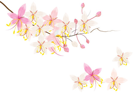 wishing: Pink cassia or wishing tree flower on white background,vector illustration