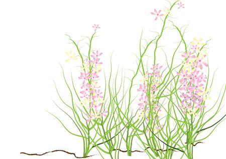 Wilde Blumen, rosa und lila wilde Blume für den Hintergrund, niedlich Vektorgrafik