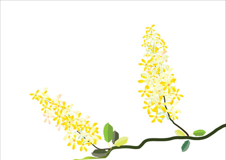 forsythia: yellow flowers for background Illustration