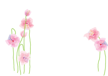 pink flowers with branch on white background