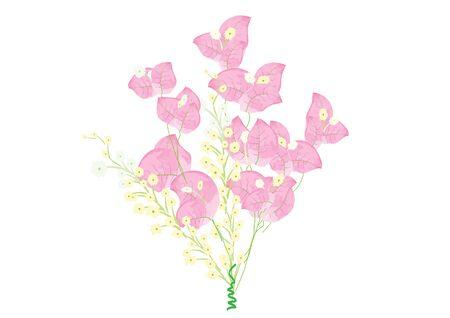 bougainvillea: Bougainvillea pink flowers on white background isolated Illustration