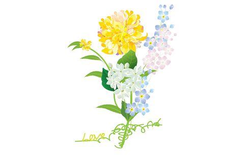 dahlia: dahlia flower ,yellow  flowers on white background,vector illustration Illustration