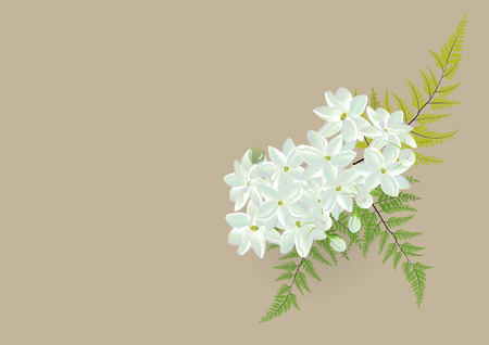 Jasmine bouquet with fern .white flowers bouquet  isolated picture .vector illustration