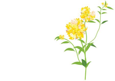 dahlia bloem, gele bloemen op een witte achtergrond, vector illustratie