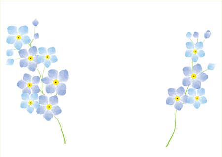 plant delicate: forgetmenot flower  blue on white background