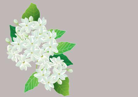 Ramo de flores de jazmín con jazmín blanco Ilustración de vector