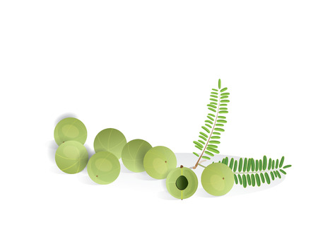 indian gooseberry fruit  with leaves for object or background . food and medicine product