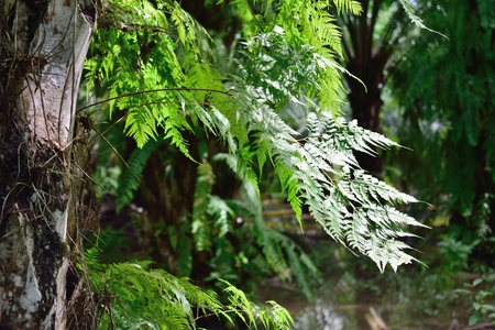 fern on the tree in the rain forest  jungle, green plant in tropical area.