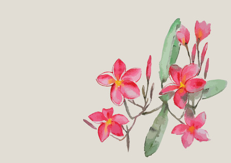 Plumeria flowers with leaves on the branch