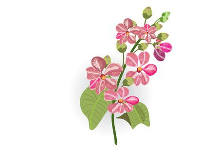 Pink lagerstroemia and fern on white background isolated picture.
