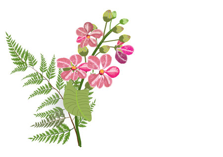 pink lagerstroemia and fern on white background isolated picture