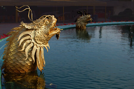 dragon fish: Dragon fish in the pool Stock Photo