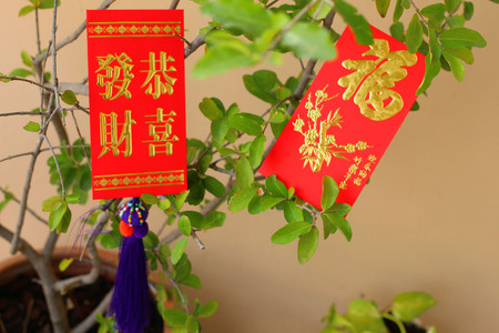 Chinese red pockets on tree photo