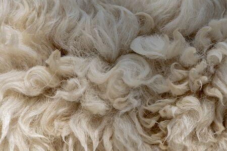 Fleece white,Close up of fleece, exture background. Stock Photo