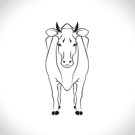 vector of an cow body design isolated on the white background. Cow body Logo.