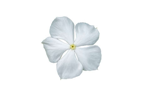 Image white flowers isolated on the white background. Image easy editable white flowers.