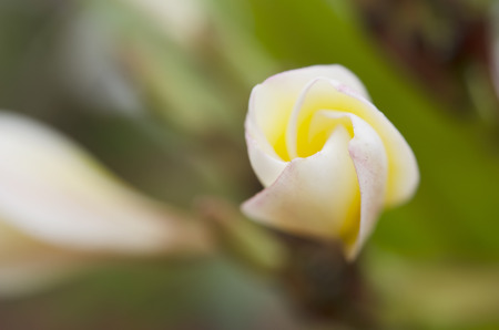 Beautiful white flower photo