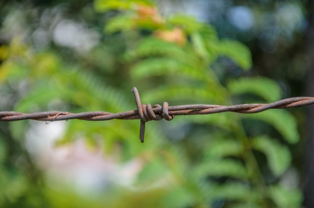 macht: Barbed wire with a green background