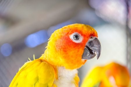 colores: Yellow parrot