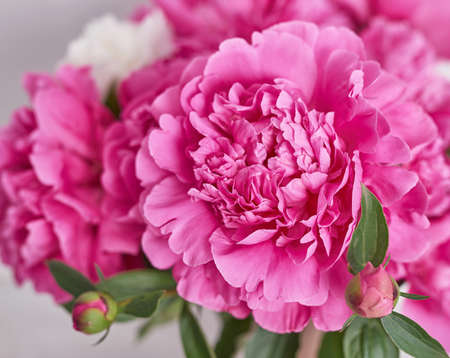 Peony bouquet in vase. Rich bunch of peonies. Greeting card for mother's day. Women's Day. Valentine's Day. Copy space. Spring or summer greeting card with flowers.Wedding invitation.Happy Birthday