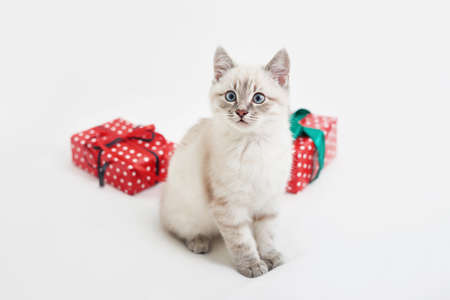 Christmas kitten with gifts. Merry christmas greeting card. New year gift for child. Winter holidays and vacations. Goods for pets, zoo clinic concept. Animal cat with christmas decor.