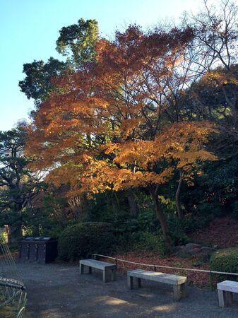 poems: Japan autumn in december