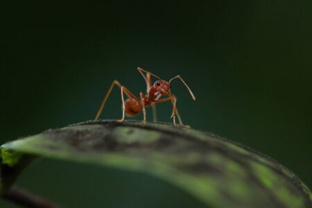 a ant walking on the green branch photo