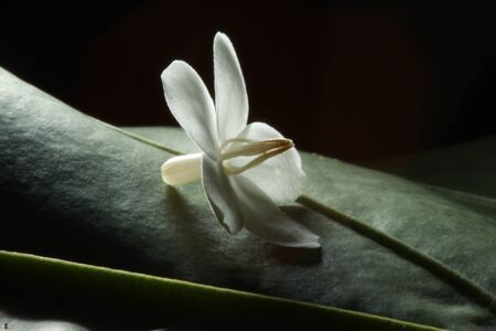 White flower on green leaf Stock Photo - 10034294