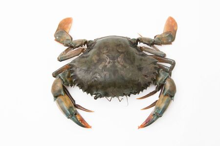 Fresh crab on a white background