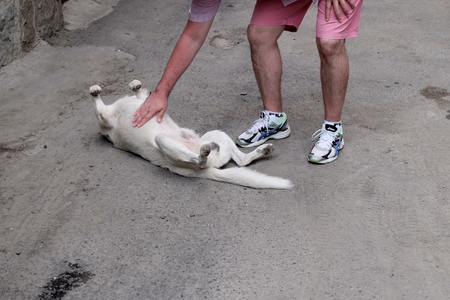 animal body part: Man on the street playing with white stray dog