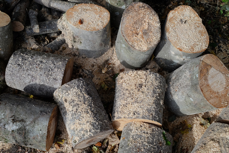 Woodpile of big wood logs with sawdust