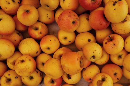 Closeup on many bio farmers apples