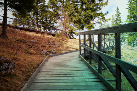 Boardwalk in Alpine woods Stock fotó - 87941556