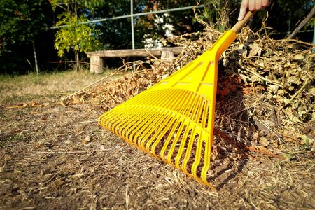 Hand racking dry leaves with yellow racks in the garden Stock fotó - 129074058